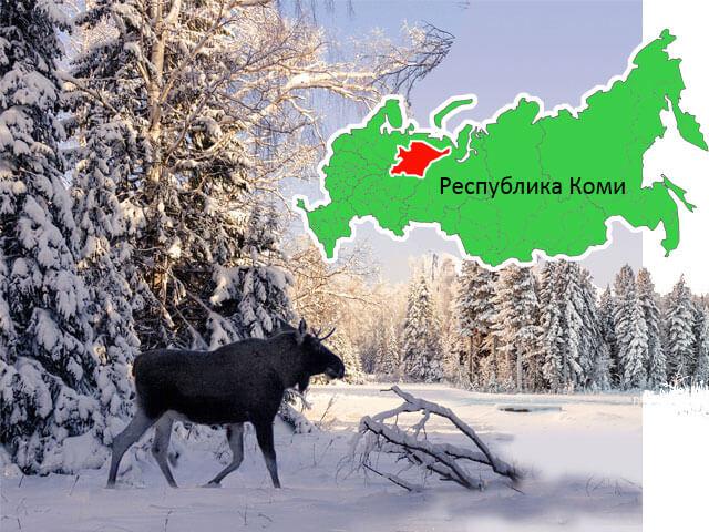 Северный лес коми края